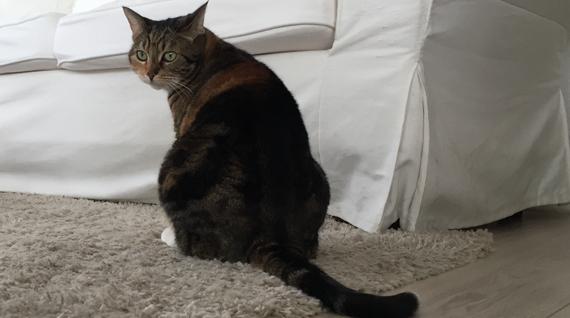 Kattenpis Geur Verwijderen Wat Te Doen Tegen Deze